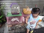 小黑3歲7~8個月:2009_0803_164754.jpg