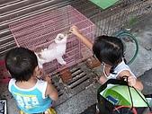 小黑3歲7~8個月:2009_0817_170040.jpg