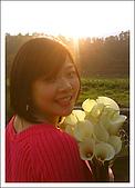 竹子湖海芋 Calla Lily:=D.jpg