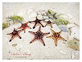 Phillipines ~ Cebu 宿霧:Beautiful starfish