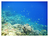 Phillipines ~ Cebu 宿霧: