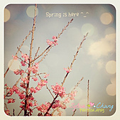 A photo a day:Spring is here