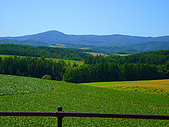 Hokkaido ~:Field of green vegetable ~