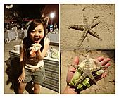 Phillipines ~ Cebu 宿霧:Starfish