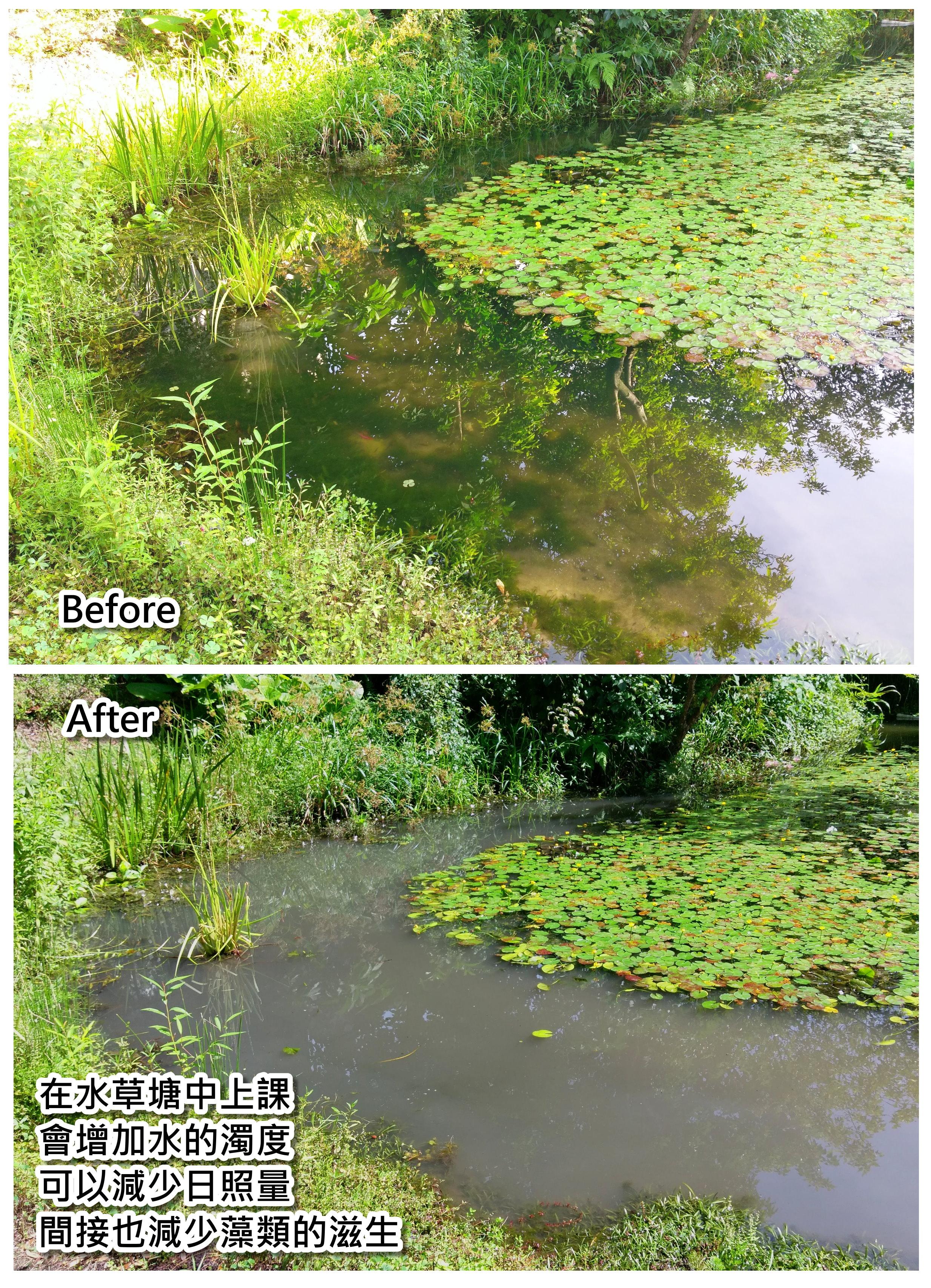 藻類的管理1.jpg - 藻類管理