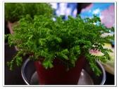 多肉植物:R0011662.JPG