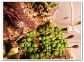 多肉植物:nEO_IMG_R0011638.jpg
