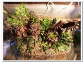 多肉植物:nEO_IMG_R0011639.jpg