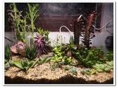 多肉植物:nEO_IMG_R0011640.jpg