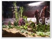多肉植物:nEO_IMG_R0011641.jpg