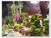 多肉植物:nEO_IMG_R0011643.jpg