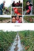 歆妤 10~11歲:20170204-003-Lily將 蔬果園.jpg