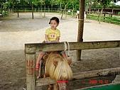 歆妤Baby-2~3歲:剛剛那隻載我載得太累了換騎這隻照相吧