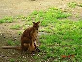 歆妤Baby-2~3歲:這裡也可以看到袋鼠喔
