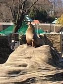 日本-名古屋自由行:20180214-東山動植物園 (7).jpg