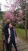 歆妤11~12歲:20170228-007-阿里山櫻花.jpg
