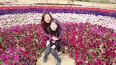 歆妤Baby-8~9歲:20140215-06 安定花海.JPG