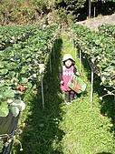 歆妤Baby-2~3歲:親愛的草莓們-我又來了