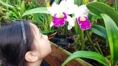 歆妤Baby-6~7歲:20120228-06 山上-蘭科植物園.jpg