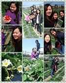 歆妤11~12歲:20170226-001-善化採草莓.jpg
