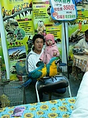 歆妤Baby-2~3歲:這是燈會商展頑皮世界展示的金剛鸚鵡.