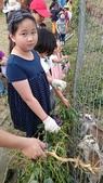 歆妤-9~10歲:20150328-008-奇美善化農場.jpg