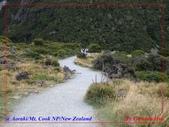 2020 紐西蘭〜庫克山國家公園:P1286519.jpg