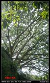 2012年四獸山步道:IMGP4246.jpg