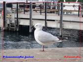 2020 紐西蘭〜皇后鎮:P1296747.jpg