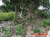 2008沖繩今歸仁城:PIC_1119.jpg