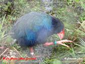 2020 紐西蘭〜蒂阿瑙湖:L1250759.jpg