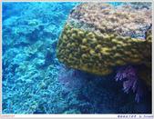 2005年彩虹的故鄉:帛琉:IMGP0865.jpg