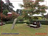 2020 紐西蘭〜凱庫拉:P1256137.jpg