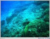 2005年彩虹的故鄉:帛琉:IMGP0867.jpg