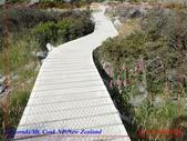 2020 紐西蘭〜庫克山國家公園:P1286644.jpg