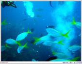 2005年彩虹的故鄉:帛琉:IMGP0872.jpg