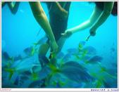 2005年彩虹的故鄉:帛琉:IMGP0877.jpg