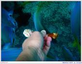 2005年彩虹的故鄉:帛琉:IMGP0879.jpg