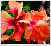2005年彩虹的故鄉:帛琉:IMGP1100.jpg