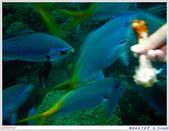 2005年彩虹的故鄉:帛琉:IMGP0880.jpg