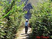 2008陽明山海芋節:DSC02809.jpg