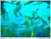 2005年彩虹的故鄉:帛琉:IMGP0881.jpg