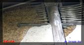 2012年碧雲山的古厝與老樹:IMGP4017.jpg