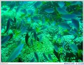 2005年彩虹的故鄉:帛琉:IMGP0883.jpg