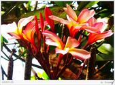 2005年彩虹的故鄉:帛琉:IMGP1126.jpg