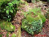 2008陽明山海芋節:DSC02793.jpg