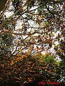 2008陽明山海芋節:DSC02794.jpg