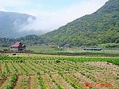 2008陽明山海芋節:DSC02795.jpg