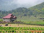 2008陽明山海芋節:DSC02796.jpg