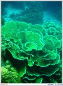 2005年彩虹的故鄉:帛琉:IMGP0890.jpg